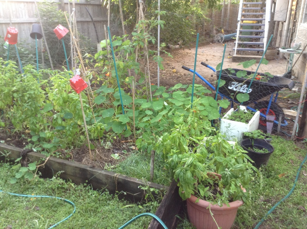 Why writing a novel is like gardening (3/6)